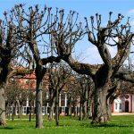 Führung Schloss Seehof - Seehof Orangerie - Foto: © Prof. Uta Hengelhaupt